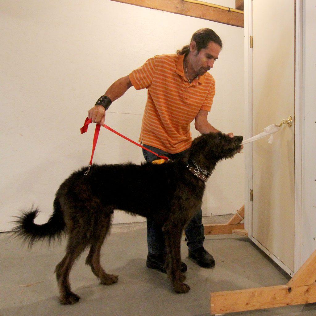 amazing-service-dogs-dustin-door-dog-training