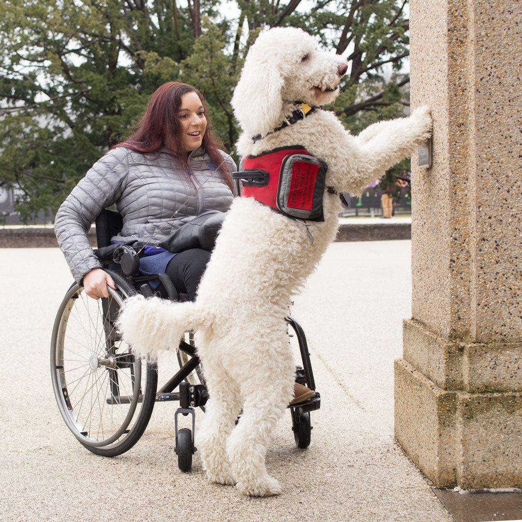 amazing-service-dogs-opening-doors