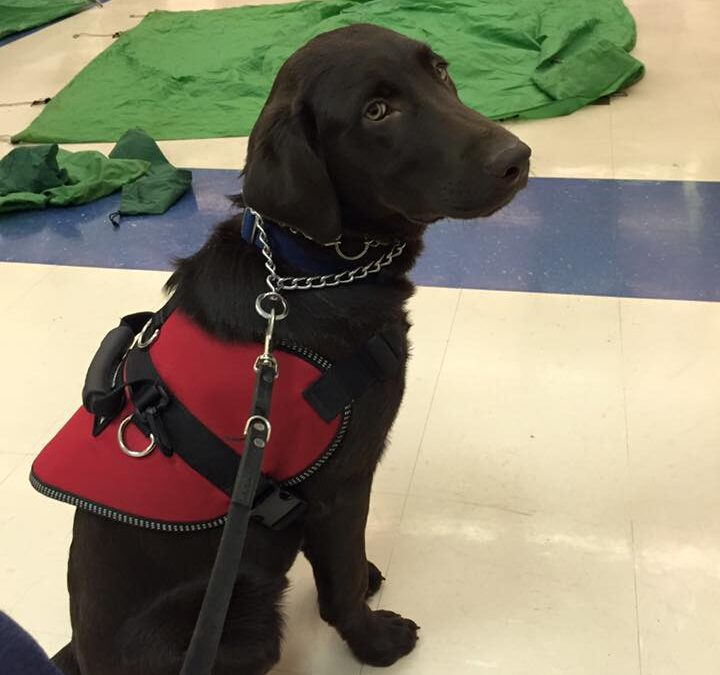 What Questions Can Someone Legally Ask to Determine if a Dog is a Service Animal?