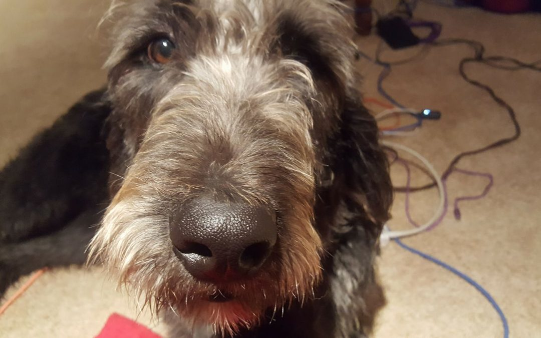 Mason F. Labradoodle's Final Training, Part 10