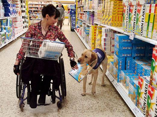 Are Stores Required to Allow Service Animals to be Placed in a Shopping Cart?