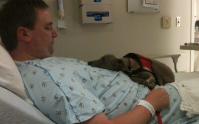 Must a Hospital Allow a Disabled Patient to Keep a Service Animal in Their Room?