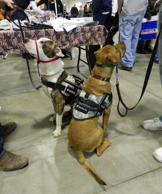 When Might a Service Dog's Presence Fundamentally Alter the Nature of a Service or Program Provided to the Public?