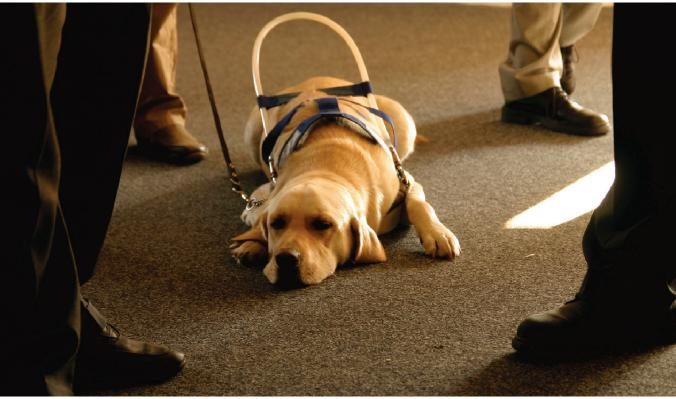 Can Hotels Assign Designated Rooms for Guests with Service Animals?