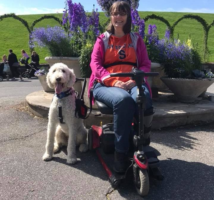 Need a Service Dog? Why You Should Consider a Professionally Trained Program Dog Vs Owner Training.