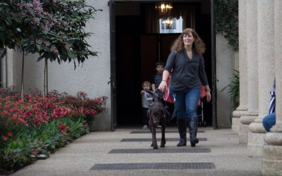 'Faking' a service dog (SD) is now a criminal offense in over 20 U.S. states, and means hefty fines, jailtime, or both