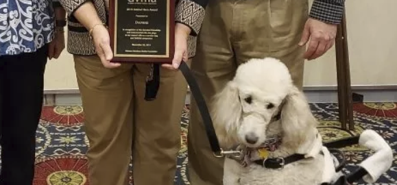 Amazing Tails Graduate, Daphne, Receives Service Dog Hero Award from Delaware Veterinary Medical Association (DVMA)