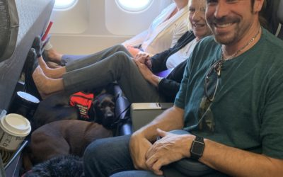 Tips for Air Travel with a Service Dog