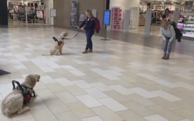 Video of Ridley and Jimmy training at Christiana Mall
